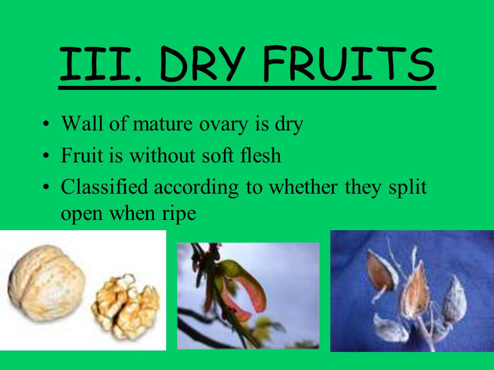 III. DRY FRUITS Wall of mature ovary is dry