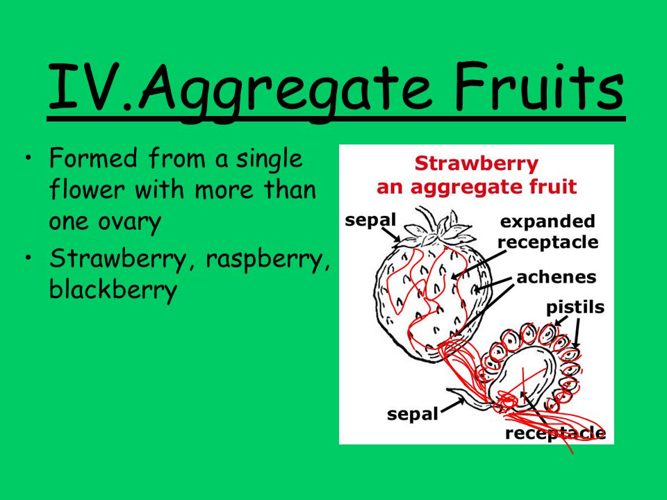 IV.Aggregate Fruits Formed from a single flower with more than one ovary.