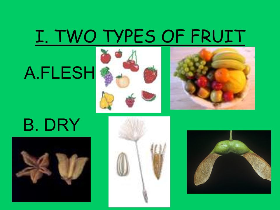 I. TWO TYPES OF FRUIT A.FLESHY B. DRY