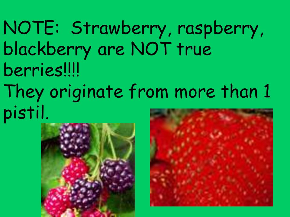 NOTE: Strawberry, raspberry, blackberry are NOT true berries