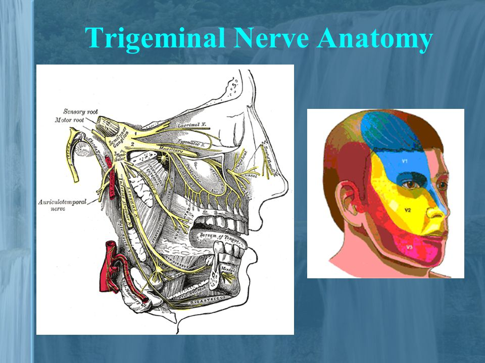 Diagnosis And Treatment Of Trigeminal Neuralgia Ppt Video Online