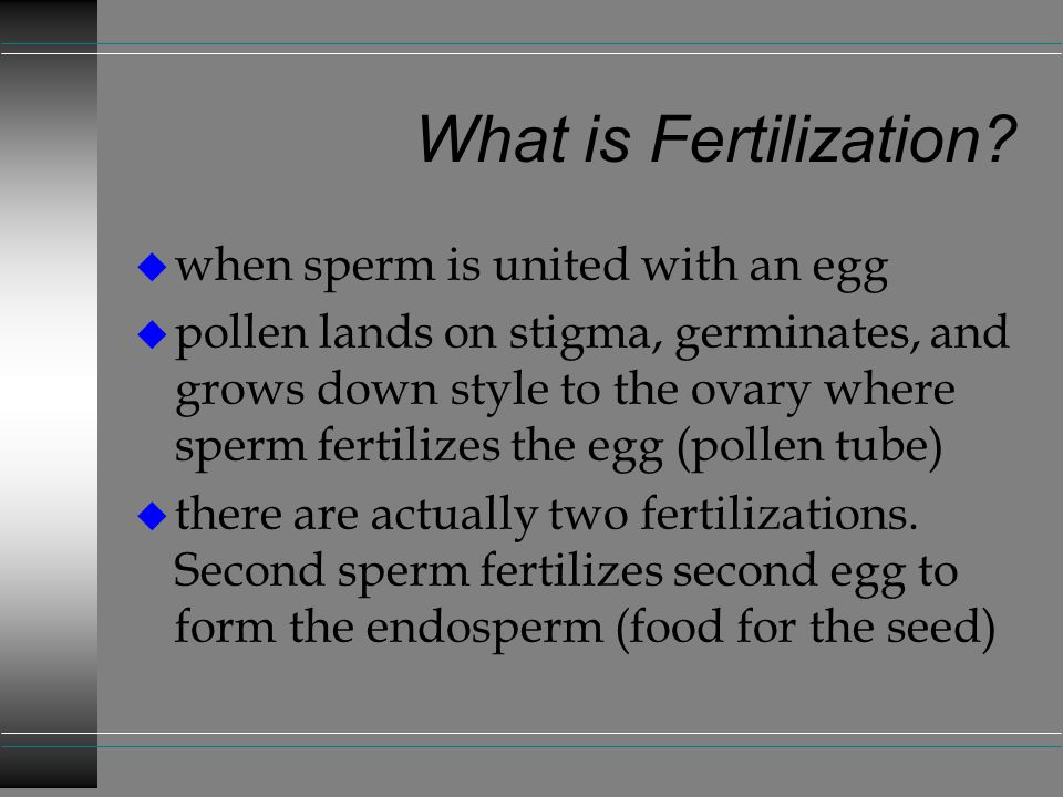 What is Fertilization when sperm is united with an egg