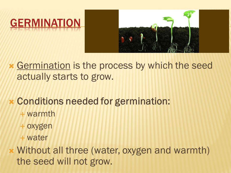 Sexual Reproduction In Seed Producing Plants Ppt Video