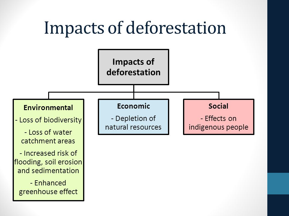 Effect of deforestation on indigenous people