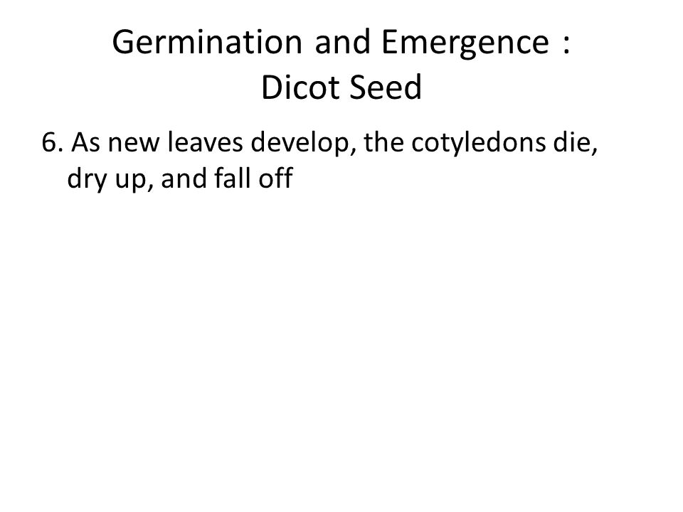 the germination patterns of dicot and Chapter 5 plant growth and development pattern seed banks variation in soil temperature germination cues in.