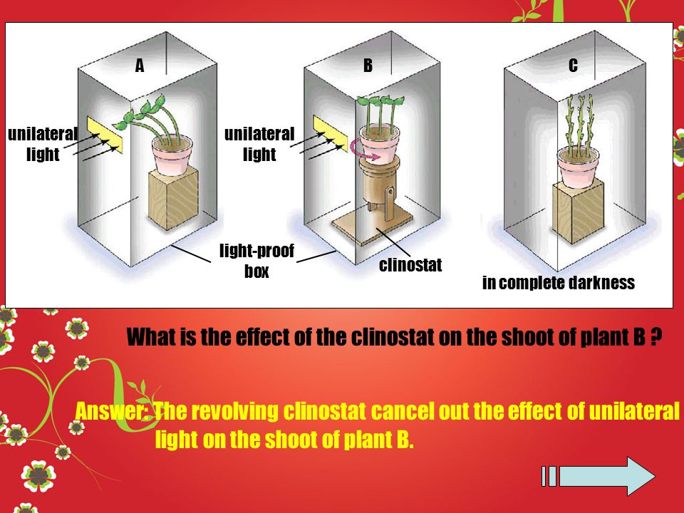 The Types Of Movement Observed In Plants Ppt Video