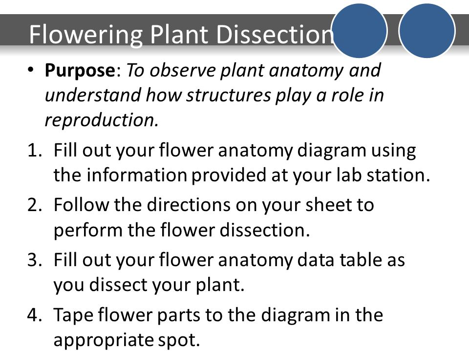 DO NOW What do you think is inside of a plants seed Date 217 – Flower Dissection Worksheet