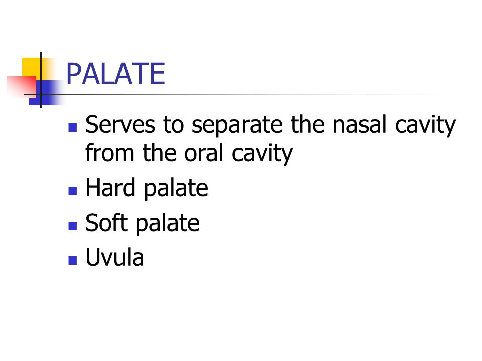 PALATE Serves to separate the nasal cavity from the oral cavity