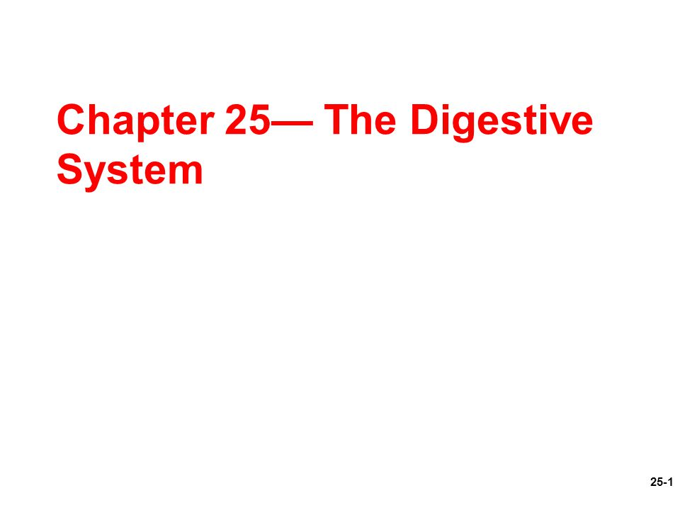 Critical thinking questions digestive system – The Human Digestive System Worksheet
