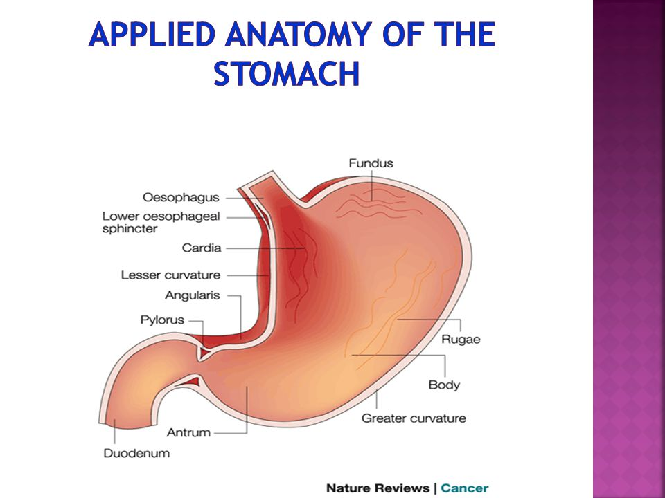 Applied anatomy of the stomach