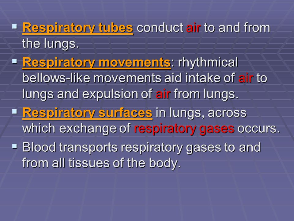 Respiratory tubes conduct air to and from the lungs.