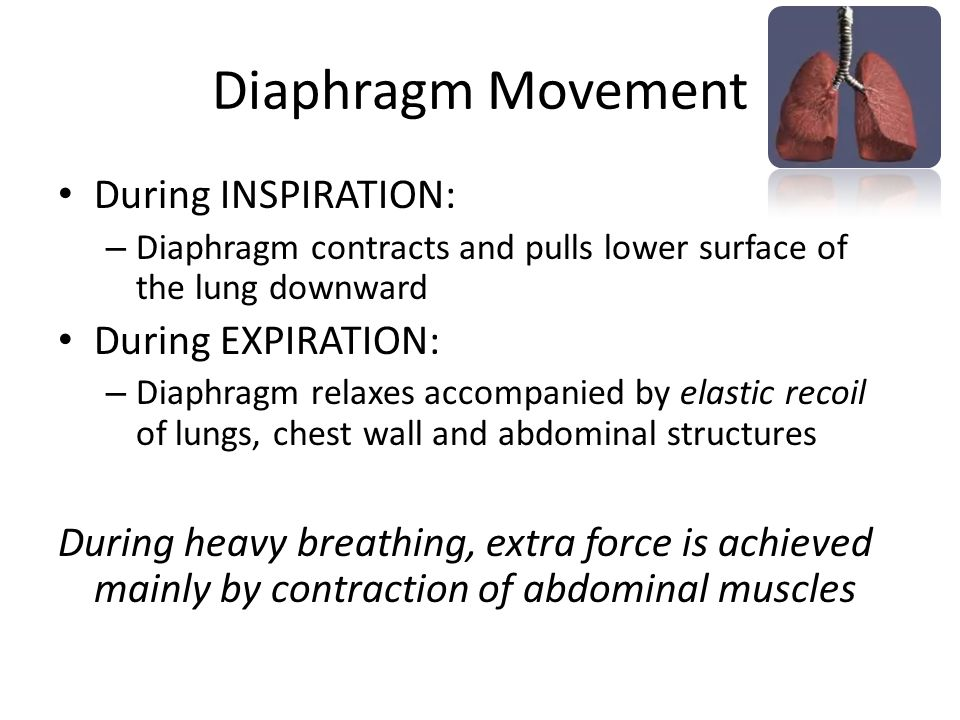 Diaphragm Movement During INSPIRATION: During EXPIRATION: