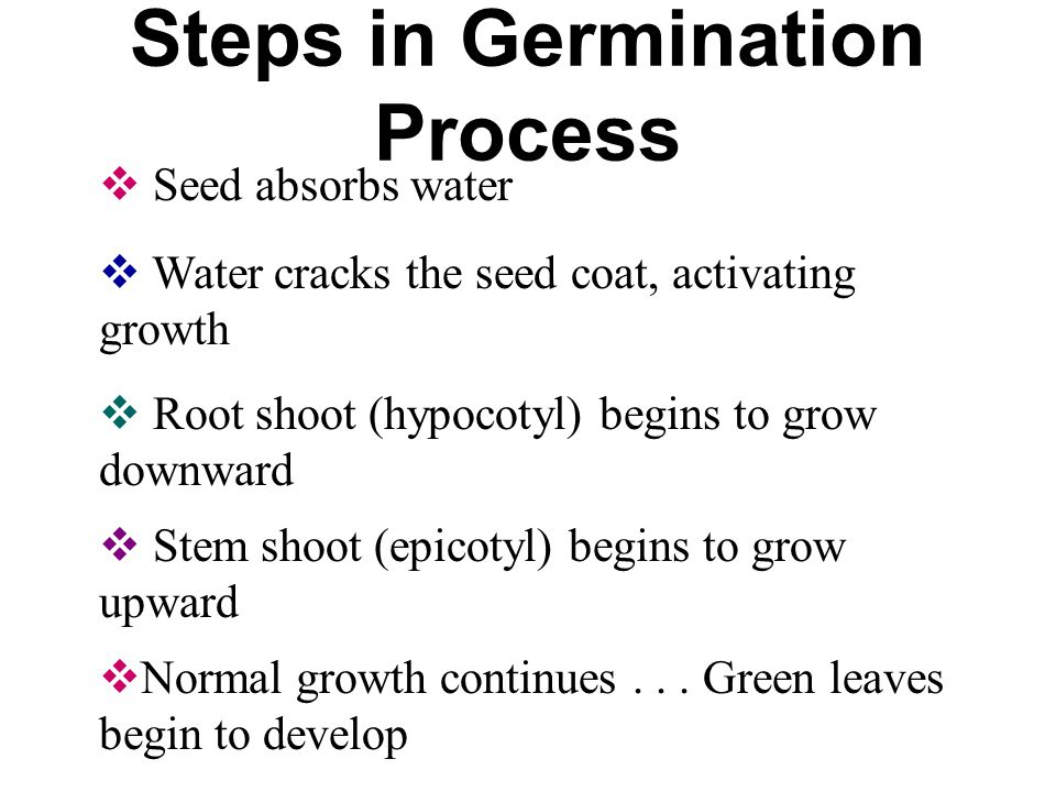 think of 10 20 variables that may affect seed germination Home essays germination and beans think of 10-20 variables that may affect seed germination when they think of germination, think of a seed sprouting.