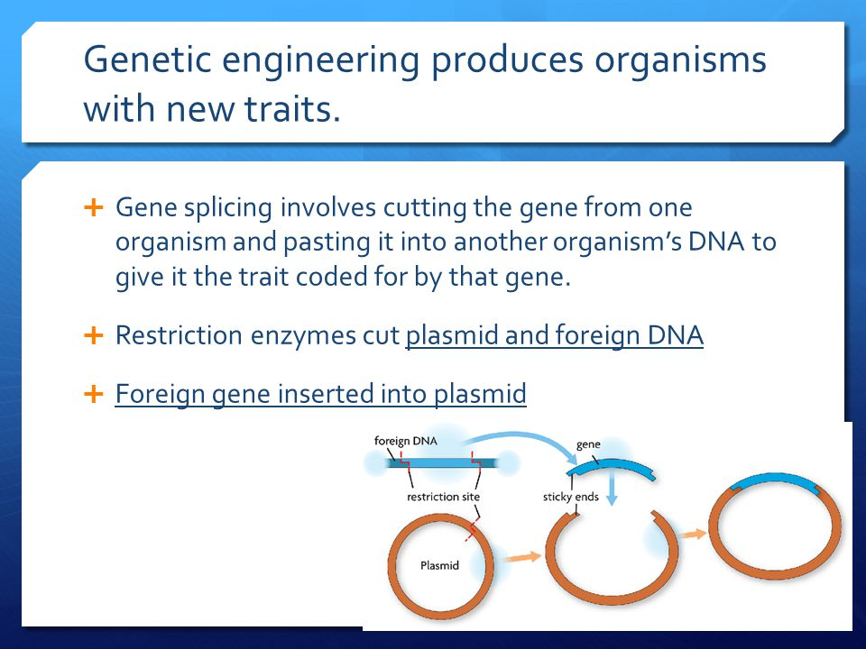 Genetic engineering produces organisms with new traits.