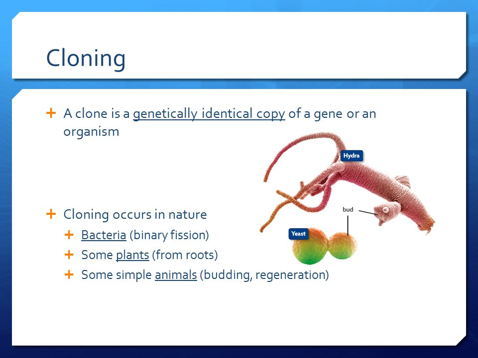 biotechnology in cloning Biotechnology: the impact on food in vitro fertilization, cloning and sex determination of embryos have been developed for different types of livestock for.