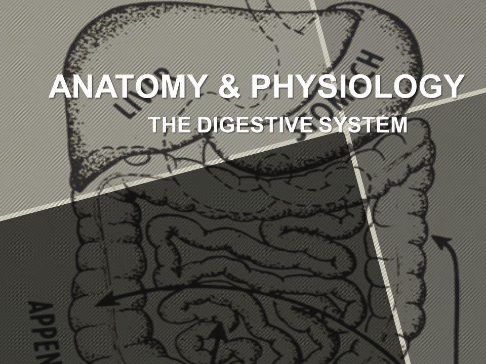 Großartig Anatomy And Physiology Videos Fotos - Anatomie und ...
