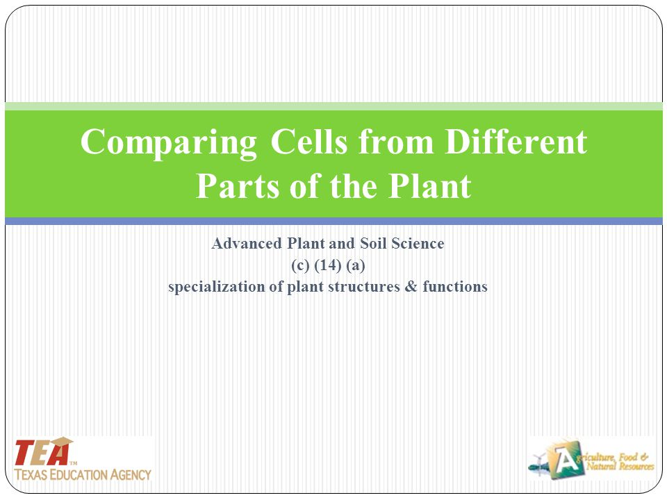 Comparing Cells from Different Parts of the Plant