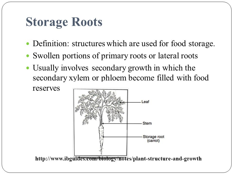 Storage Roots Definition: structures which are used for food storage.