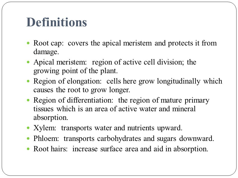 Definitions Root cap: covers the apical meristem and protects it from damage.