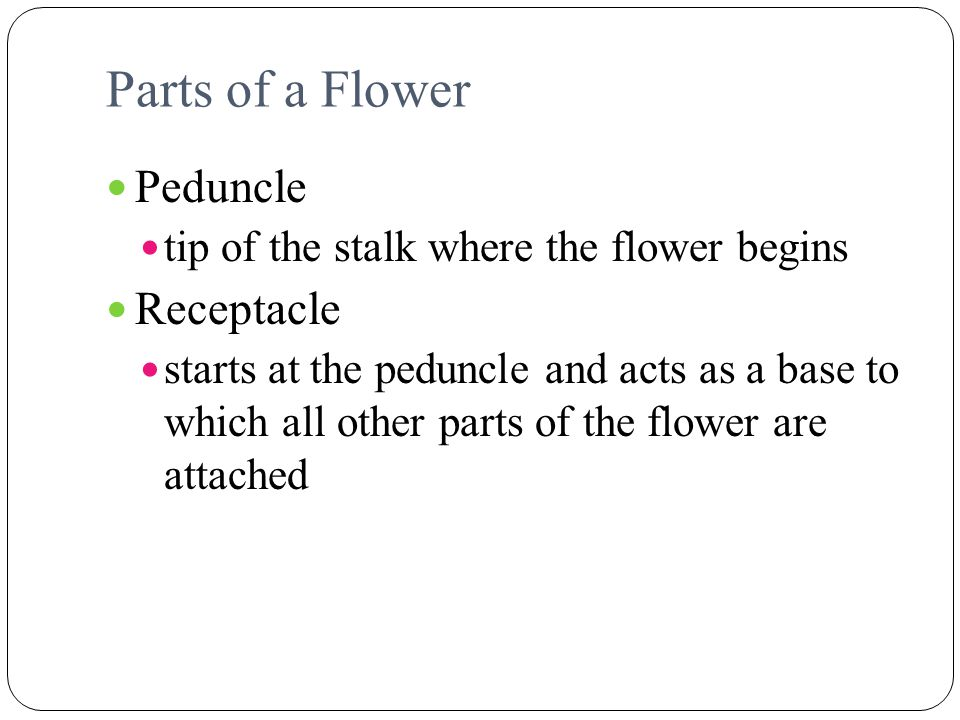 Parts of a Flower Peduncle Receptacle