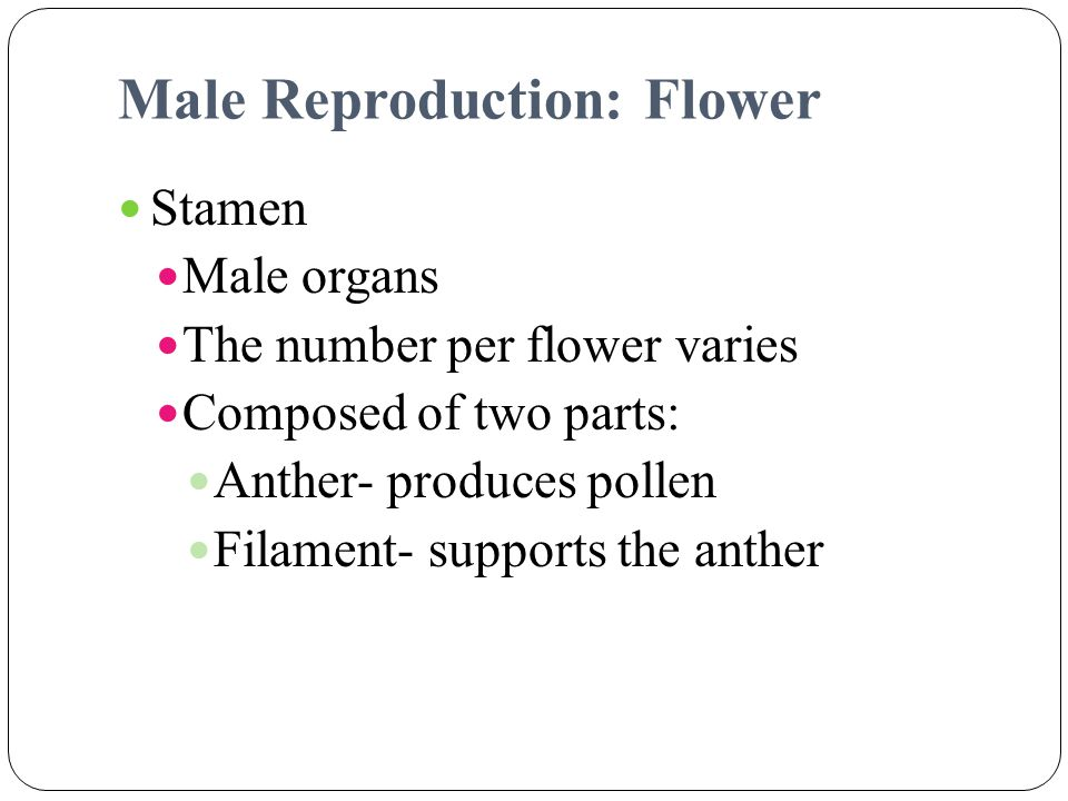 Male Reproduction: Flower