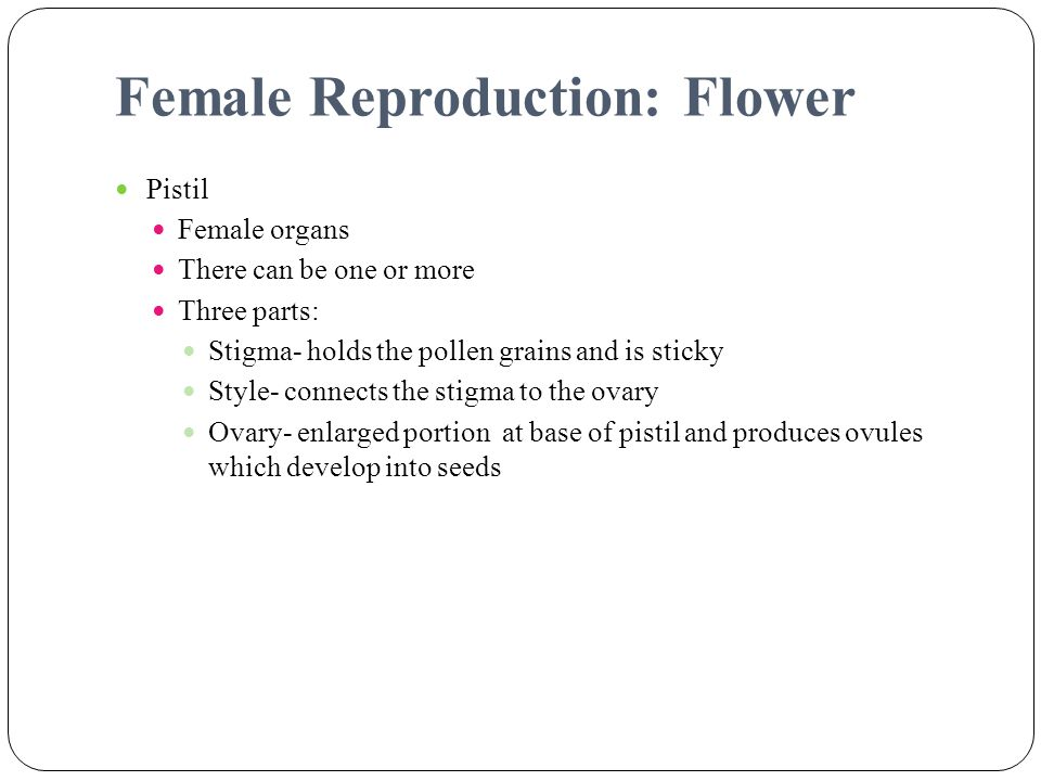 Female Reproduction: Flower