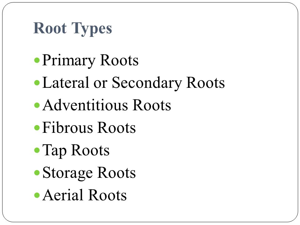 Root Types Primary Roots. Lateral or Secondary Roots. Adventitious Roots. Fibrous Roots. Tap Roots.