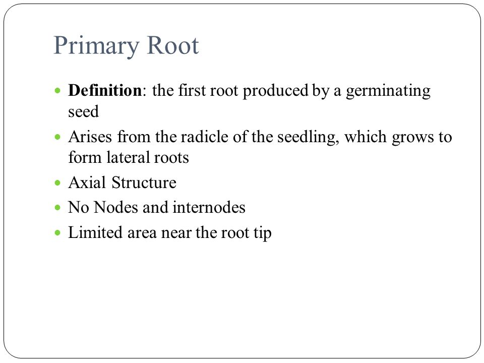 Primary Root Definition: the first root produced by a germinating seed