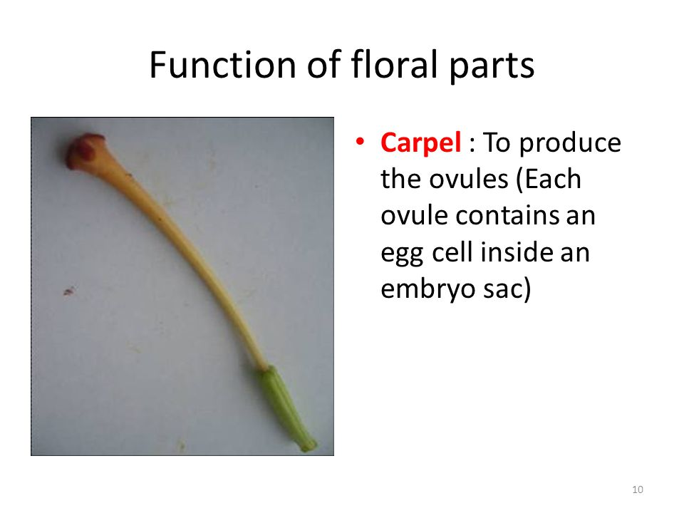 Function of floral parts