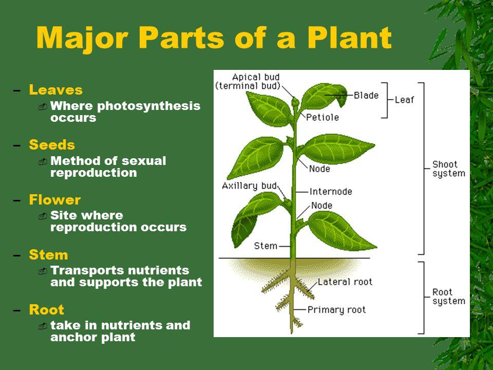 Parts Of A Plant Etamemibawa