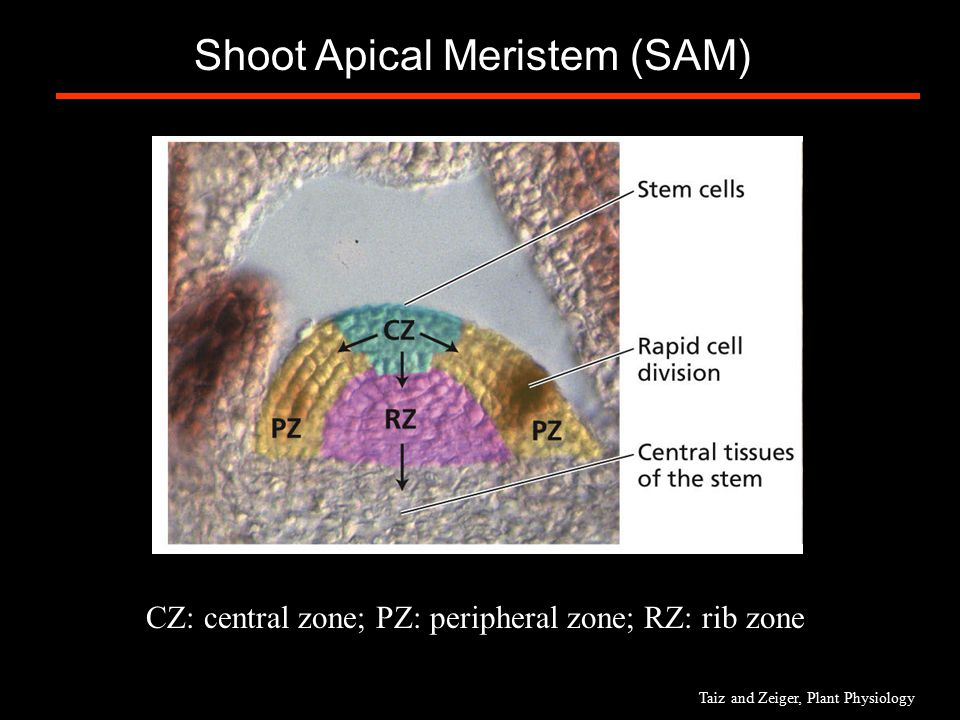 brain biology encyclopedia cells body function - 960×720