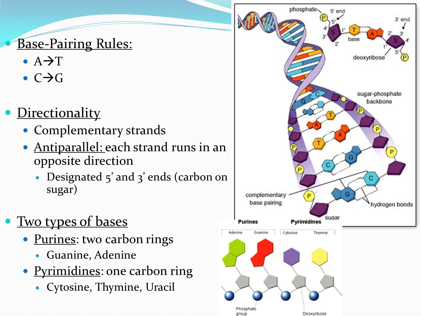 Dna and rna worksheet 23