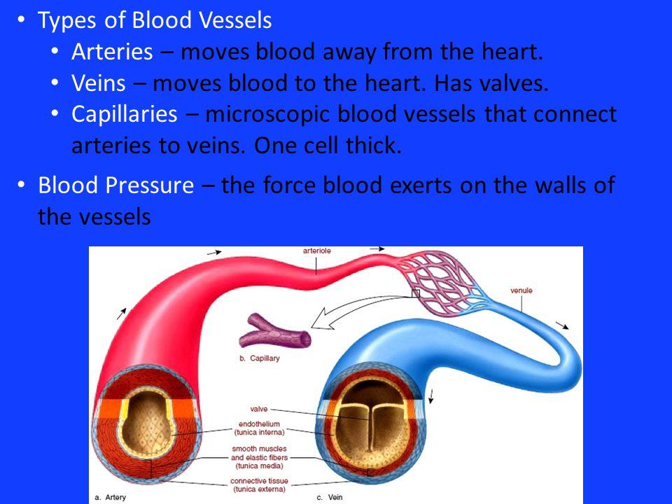 aim the cardiovascular system ppt video online download. Black Bedroom Furniture Sets. Home Design Ideas