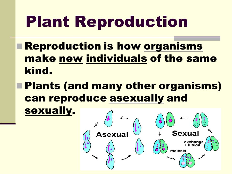 Plant Reproduction Reproduction is how organisms make new individuals of the same kind.