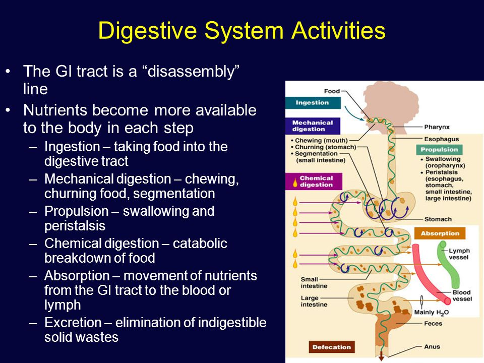 please define each mechanism propulsion absorption chemical digestion and mechanical digestion As mechanical digestion and chemical difference between metabolism and digestion a metabolic process therefore, chemical digestion falls.
