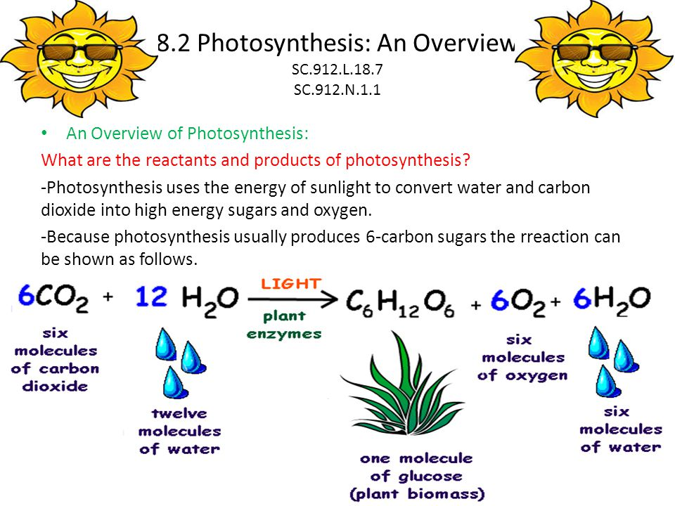 photosythesis to Photosynthesis photosynthesis is the process by which organisms that contain the pigment chlorophyll convert light energy into chemical energy which can be stored in the molecular bonds of organic molecules (eg, sugars.