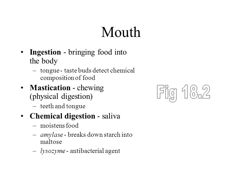 Mouth Fig 18.2 Ingestion - bringing food into the body