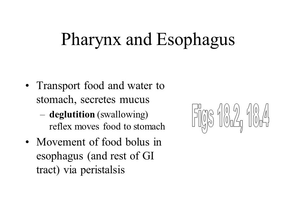 Pharynx and Esophagus Figs 18.2, 18.4