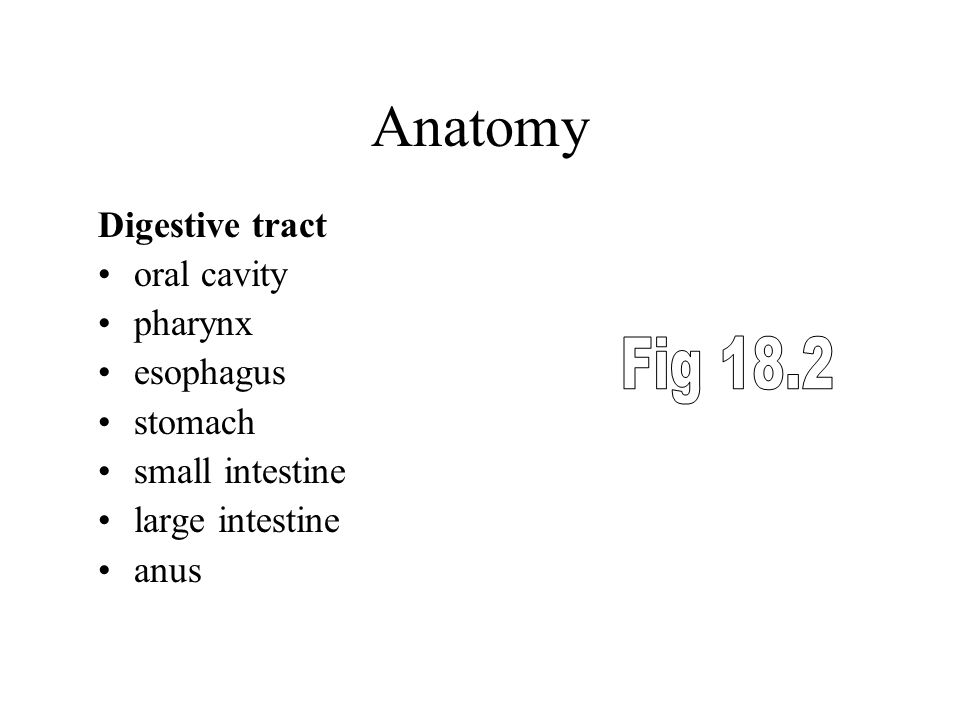 Anatomy Fig 18.2 Digestive tract oral cavity pharynx esophagus stomach