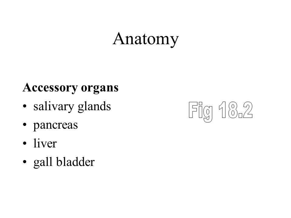Anatomy Fig 18.2 Accessory organs salivary glands pancreas liver