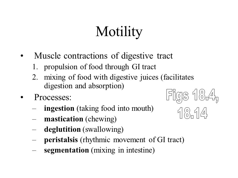 Motility Figs 18.4, Muscle contractions of digestive tract