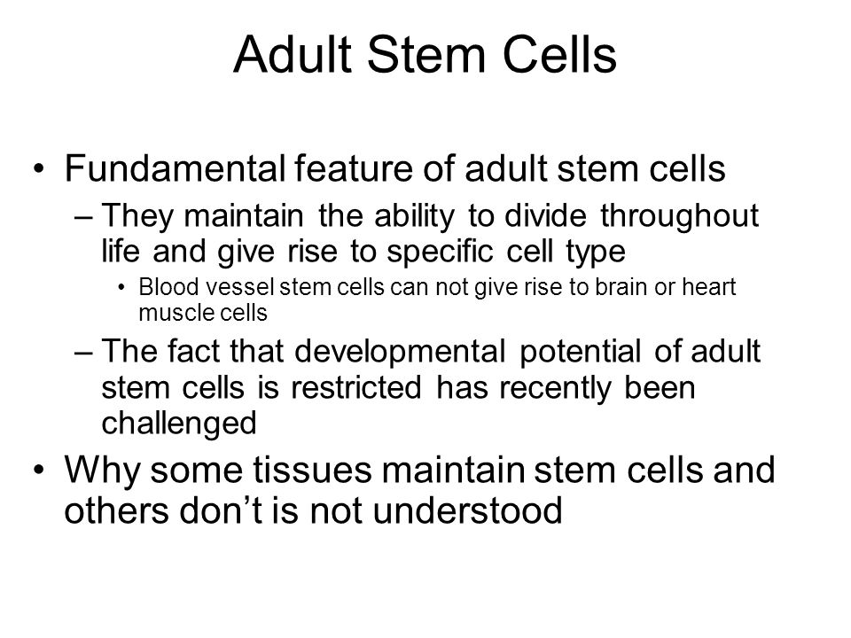 an argument in favor of stem cell research The politics of stem cells:  i'm in favor of cloning nuclei in the form of stem cells  this amounts to a double whammy against stem cell research.