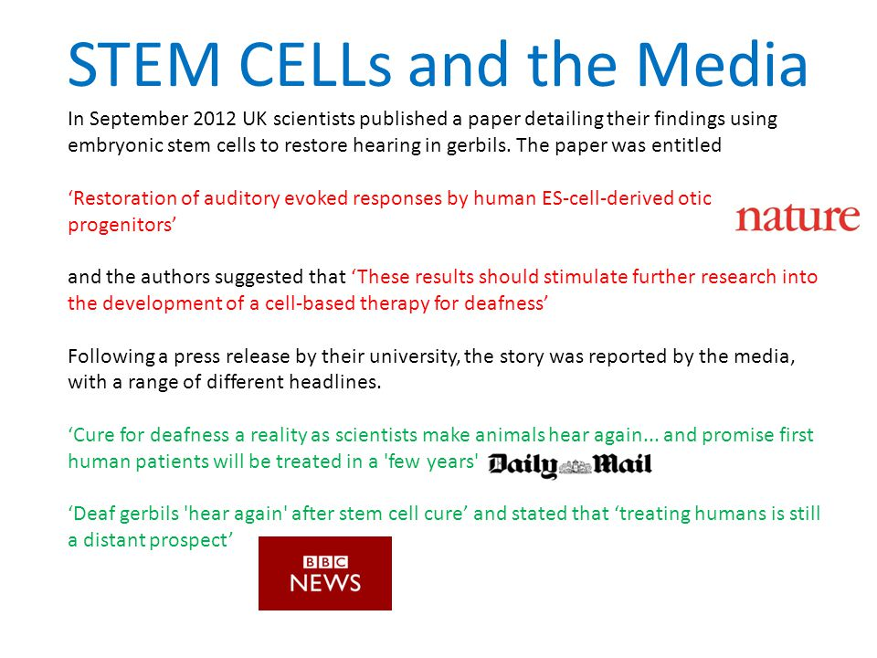 Stem cell essay