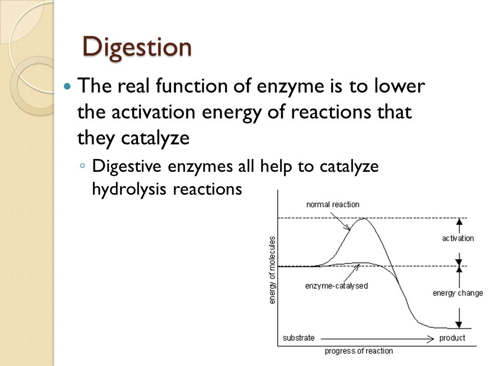 digestive enzymes and their functions essay Combines with food molecules and splits them into smaller moleculeswater we will write a custom essay sample on a&p ch15 digestive  digestive enzymes  their.