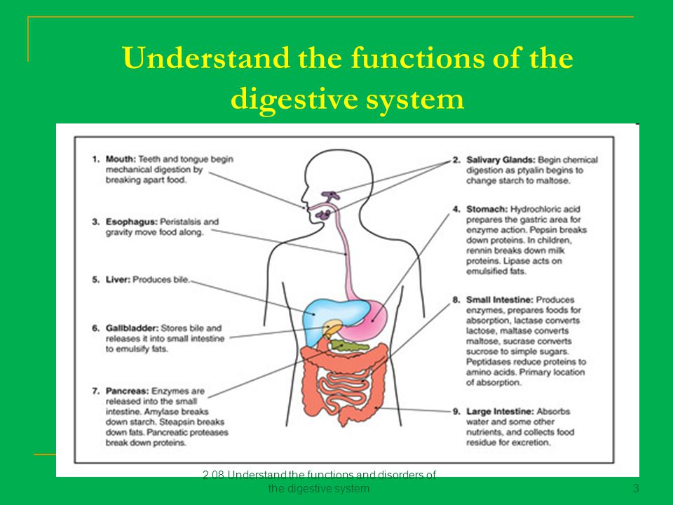 disorders of the digestive system Digestive diseases information including symptoms whipple disease and dysentery the digestive system involves the tube from the mouth to the rectum.