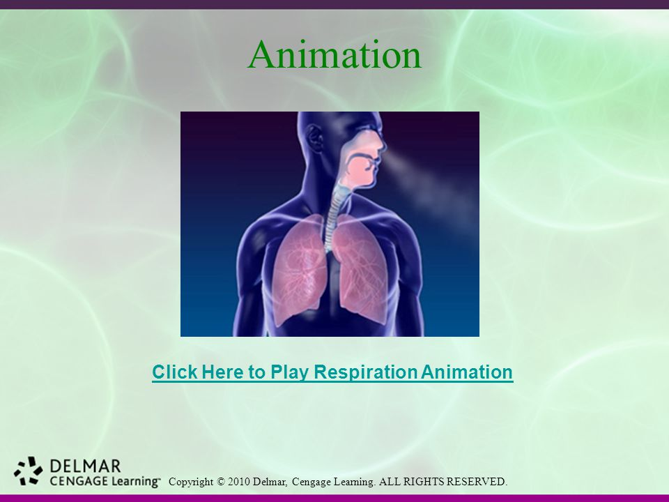 Animation Click Here to Play Respiration Animation