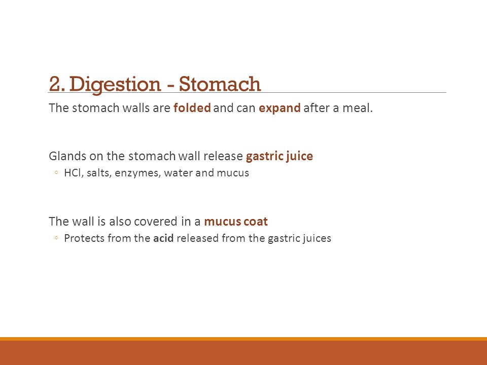 2. Digestion - Stomach The stomach walls are folded and can expand after a meal. Glands on the stomach wall release gastric juice.