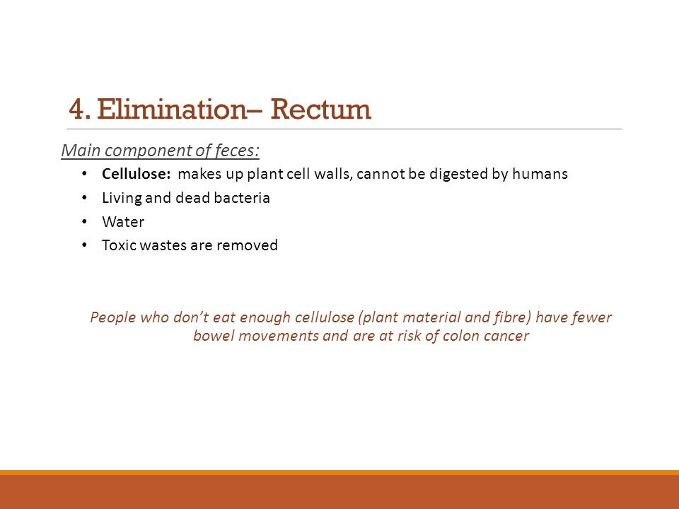 4. Elimination– Rectum Main component of feces: