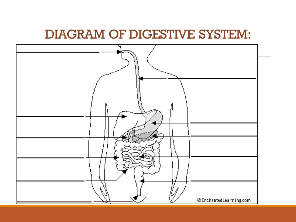 DIAGRAM OF DIGESTIVE SYSTEM: