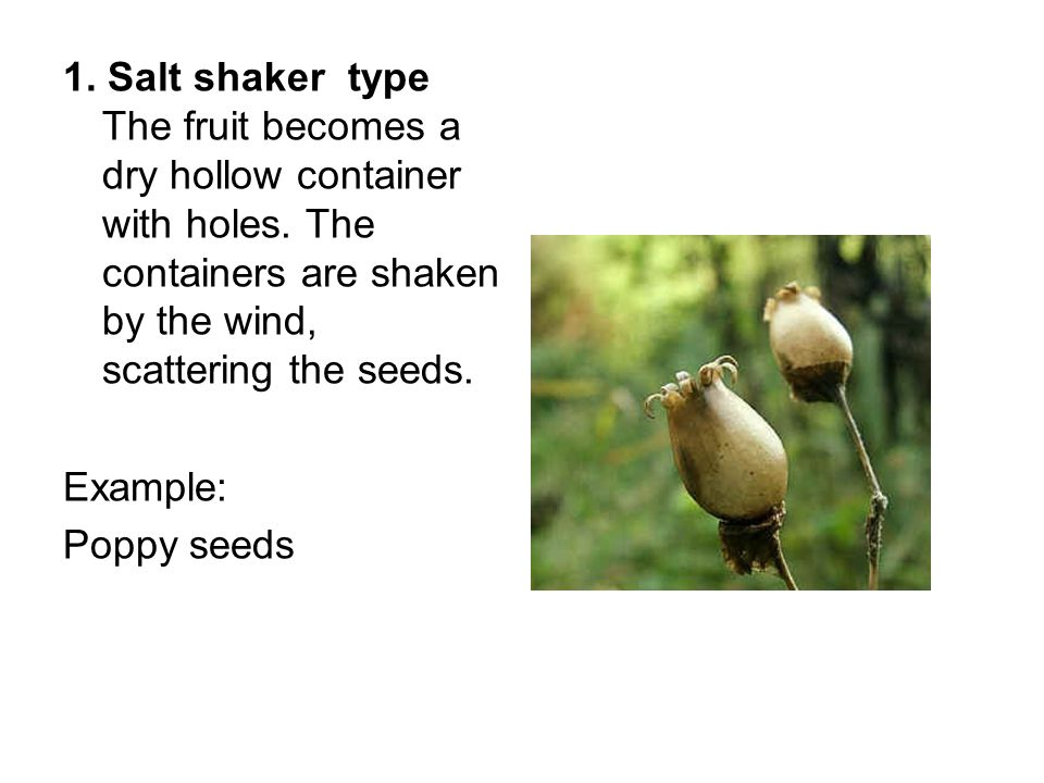 how to make a wind dispersal seed pdf